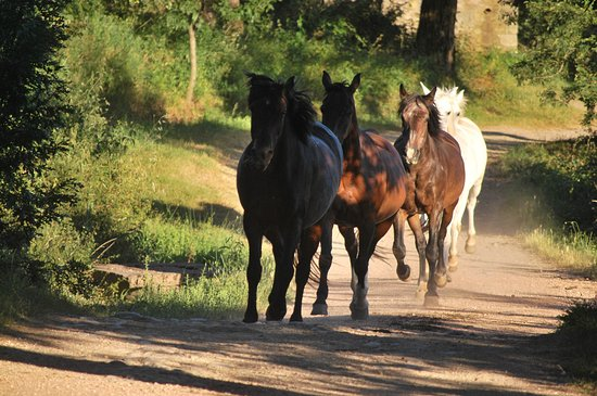 Castell'Azzara, Italia: Camminando verso le scuderie....