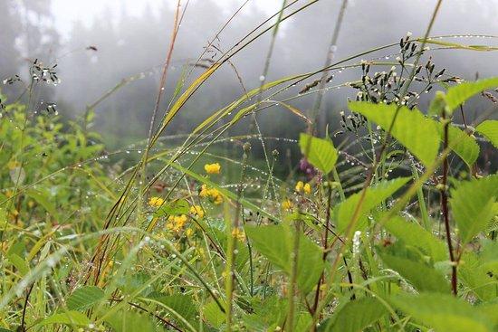 Canadian Wilderness Adventures: Rainy Meadow