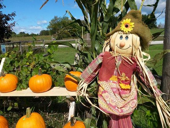 Egg Harbor, Ουισκόνσιν: Pumpkins for sale!