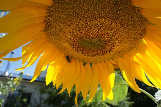Paonia, CO: we LOVE bees
