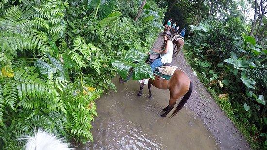 Honokaa, Hawái: My kids were in heaven
