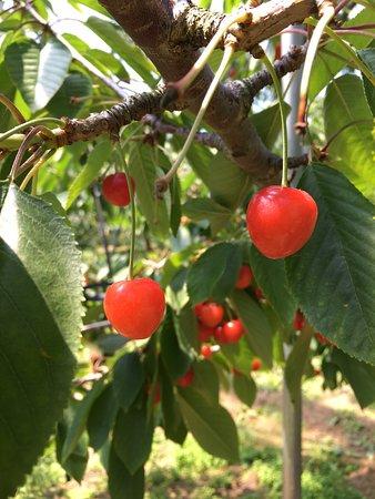 Hamada Marutome Fruits Gaden