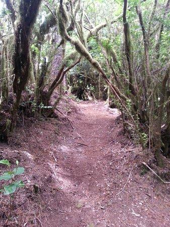写真Hobbit Trail枚
