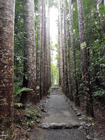 Mena Creek, Αυστραλία: Just amazing - Paronella Park is a definite MUST DO