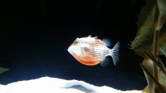 Underwater World Sea Life Mooloolaba