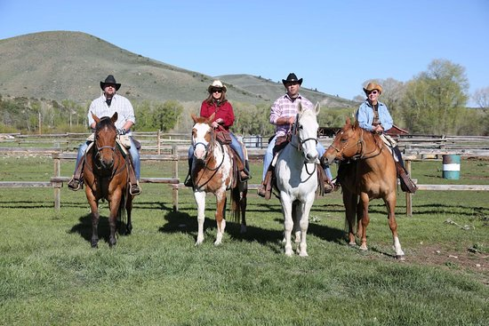 Parshall, CO: Our beautiful horses!