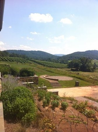 North Garden, VA: Vineyard garden outlook