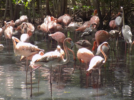 Isla Barú, Colombia: :)