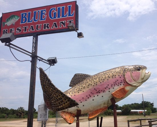 Blue Gill Restaurant Incorporated: You can't miss the big fish out front!