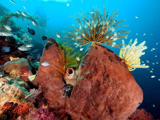 Siladen Island, Indonesien: Diving around Siladen and Bunaken.