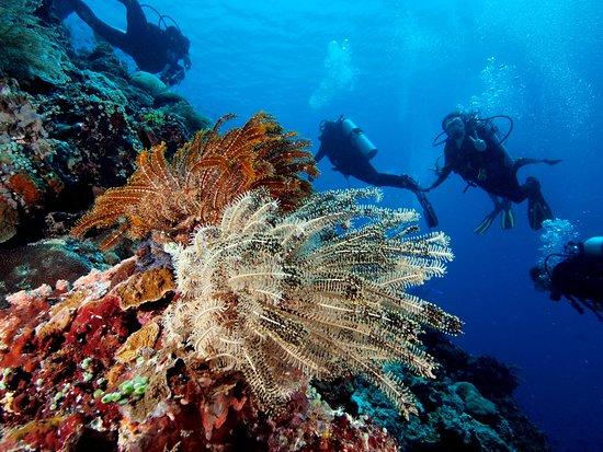 Siladen Resort & Spa: Diving around Siladen and Bunaken.