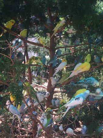 เวสต์ออเรนจ์, นิวเจอร์ซีย์: The Bird Aviary