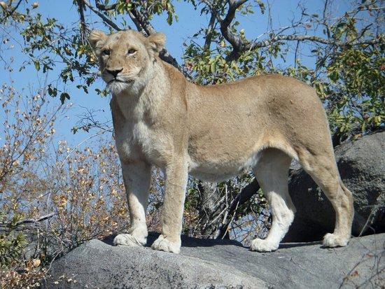 Mala Mala Private Game Reserve, Sudáfrica: SAM_0699_large.jpg