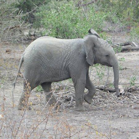 Mala Mala Private Game Reserve, جنوب أفريقيا: SAM_0856_large.jpg