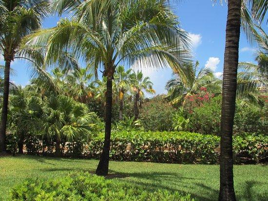 Superior Majestic Tours (Paradise Island, Bahamas)   Scenic View