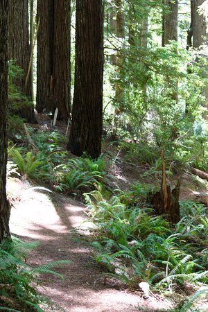 Brookings, OR: Beautiful old growth forest.