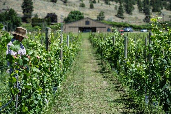 เพนทิกตัน, แคนาดา: Little Engine Wines Vineyard