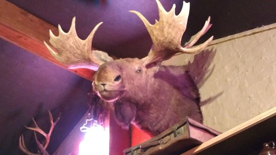 Zanesville, OH: This moose was staring at me while I ate I wonder if they sell moosehead beer?