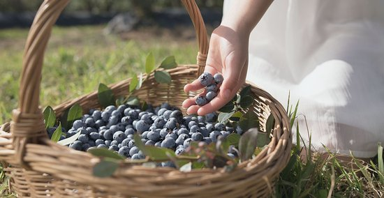 Coffs Harbour, Australia: Locally grown Blueberries | Coffs Coast's subtropical climate is perfect to grow a great selecti