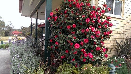 วอร์วิก, ออสเตรเลีย: Beautiful gardens and clean grounds