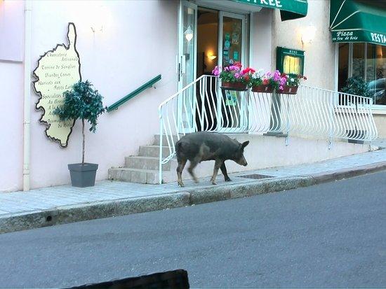 Calacuccia, Francja: accettano tutti :-) :-)