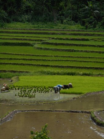 Nong Khiaw, Laos: hike through villages and ricefields