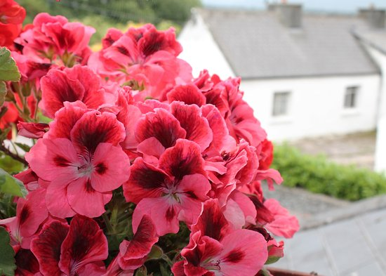 Tom & Eileen's Farm: The view out our window was gorgeous. Vintage geraniums in the window box were lovely.