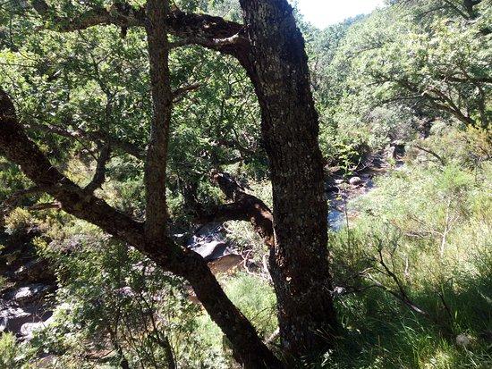 Montejo de la Sierra 사진