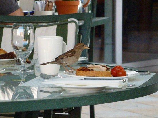 Hilton Imperial Dubrovnik: 鳥が食べる