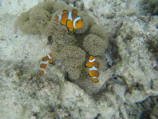 Imagen de Coral View Island Resort