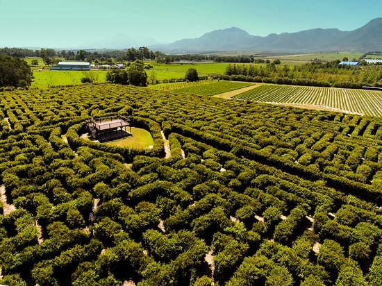 George, Sudáfrica: Aerial view of the hedge maze