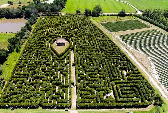 Τζορτζ, Νότια Αφρική: The hedge maze has over 10km of pathways