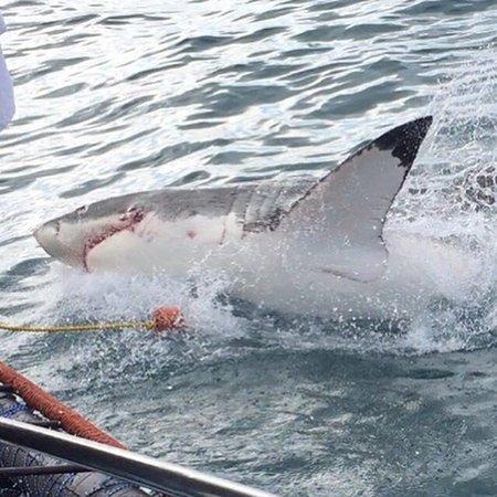 Shark Diving Unlimited: photo0.jpg