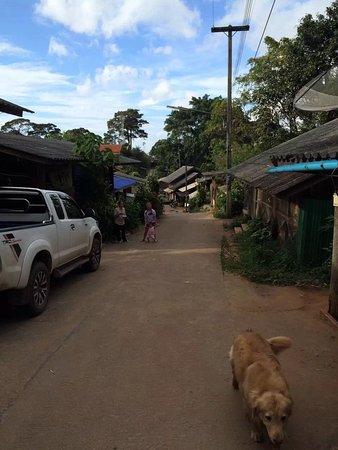 Provincia di Chiang Mai, Thailandia: Jungle flight 2