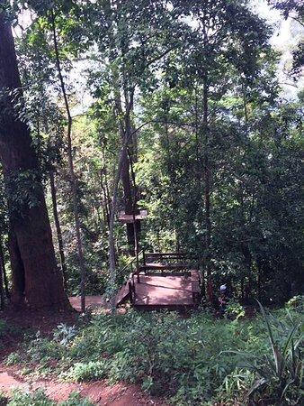 Provincia di Chiang Mai, Thailandia: Jungle flight 4