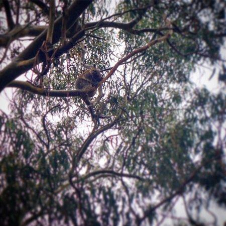 Hanson Bay, Australien: photo1.jpg