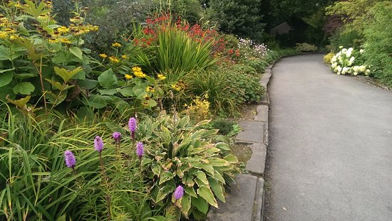 Hope Park : Flower beds bursting with colour, texture and life
