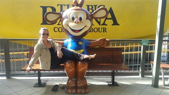 Coffs Harbour, Avustralya: The Big Banana