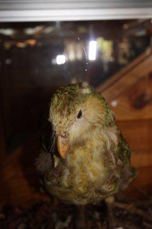 Masterton, Nueva Zelanda: Kakapo