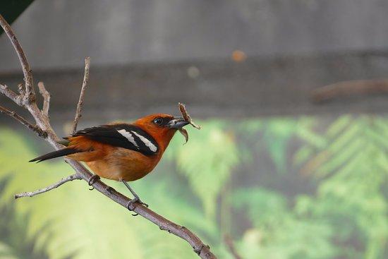 Villars-les-Dombes, Frankrijk: Des très petit au grand oiseaux
