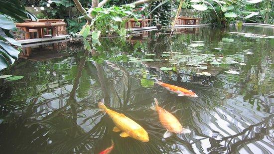 Neufchateau, Belgien: De karpers zwemmen naast de bar- en ontbijttafels