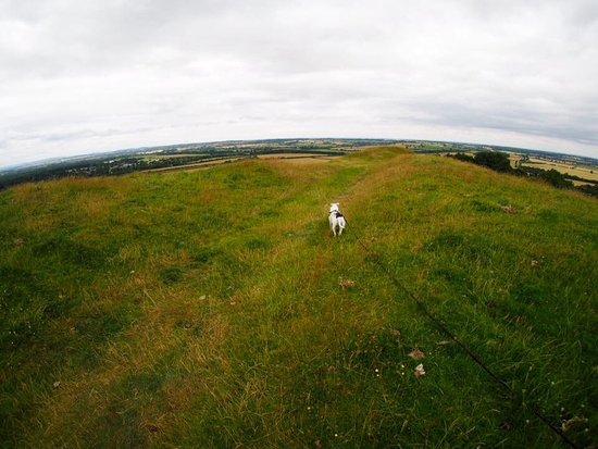 Southam, UK: Dog loved it