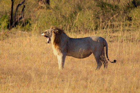 Заповедник Велгевонден, Южная Африка: photo1.jpg