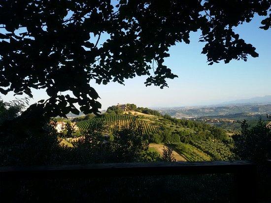 Acquaviva Picena, Italy: 20160720_193946_large.jpg