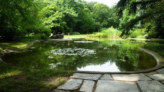 Nowoczesna architektura Oczko wodne w Alpinarium - Picture of Poznan Botanical Gardens SR36