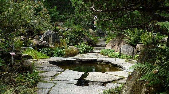 Dodatkowe Oczko wodne w Alpinarium - Picture of Poznan Botanical Gardens VT92