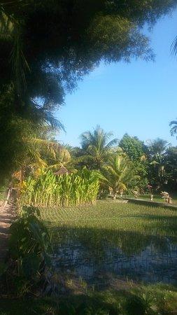 แกร์บิก บังกะโลส์: Rice fields view from Family Room