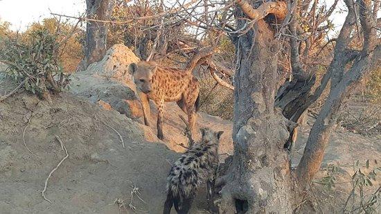 Timbavati Private Nature Reserve 사진
