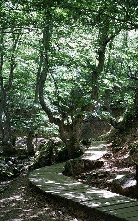 Paseo por el Bosque del Faedo