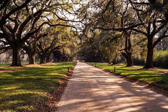 Mount Pleasant, SC: L'allée d'accès à la plantation.